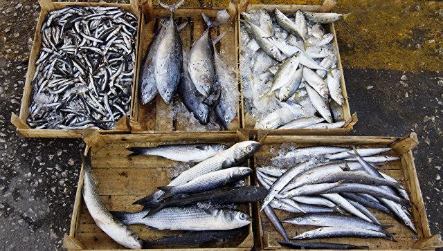 Россельхознадзор частично ограничит ввоз рыбы из Китая